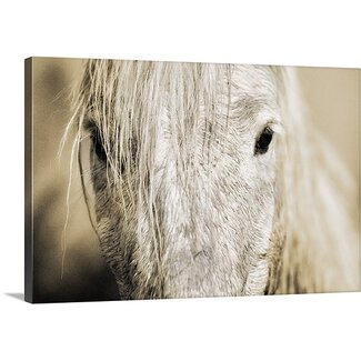 <strong>Great Big Canvas</strong> Camargue Horse by Scott Stulberg Photographic Print on Wrapped Canvas