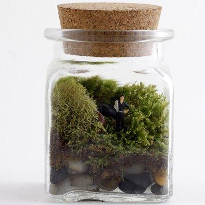 Twig terrariums le petit singularite desk top plant in - Petit terrarium ...