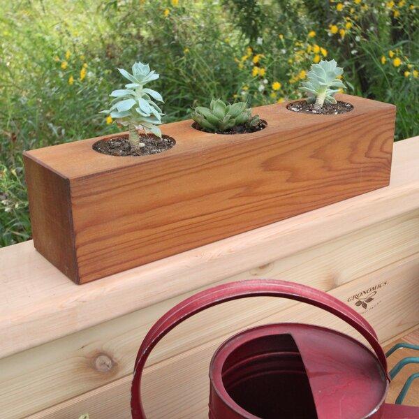 Succulent rectangular pot planter joss main - Rectangular succulent planter ...