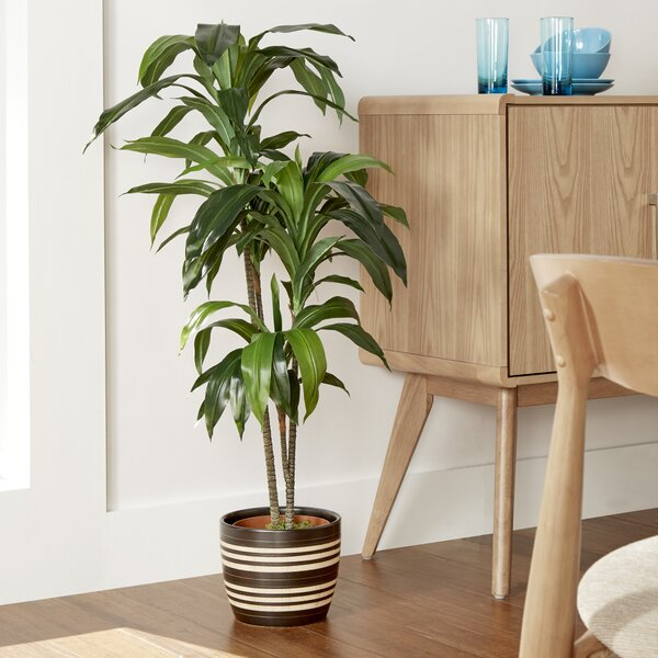 Faux dracaena reviews joss main for Green floor plant