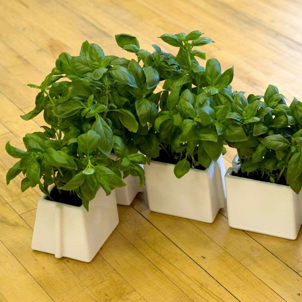 vitamin biologic novelty planter reviews wayfair uk