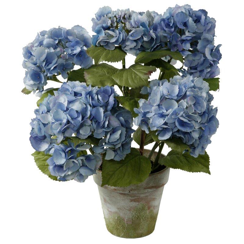 Winward designs potted 4 stem hydrangea reviews wayfair - Care potted hydrangea ...