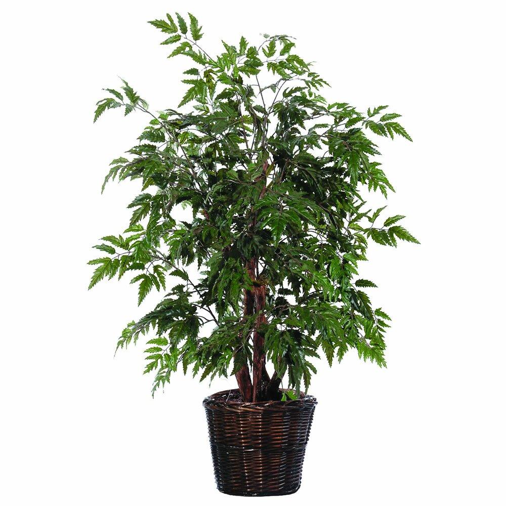 vickerman bushes artificial potted natural ming aralia tree in basket reviews. Black Bedroom Furniture Sets. Home Design Ideas