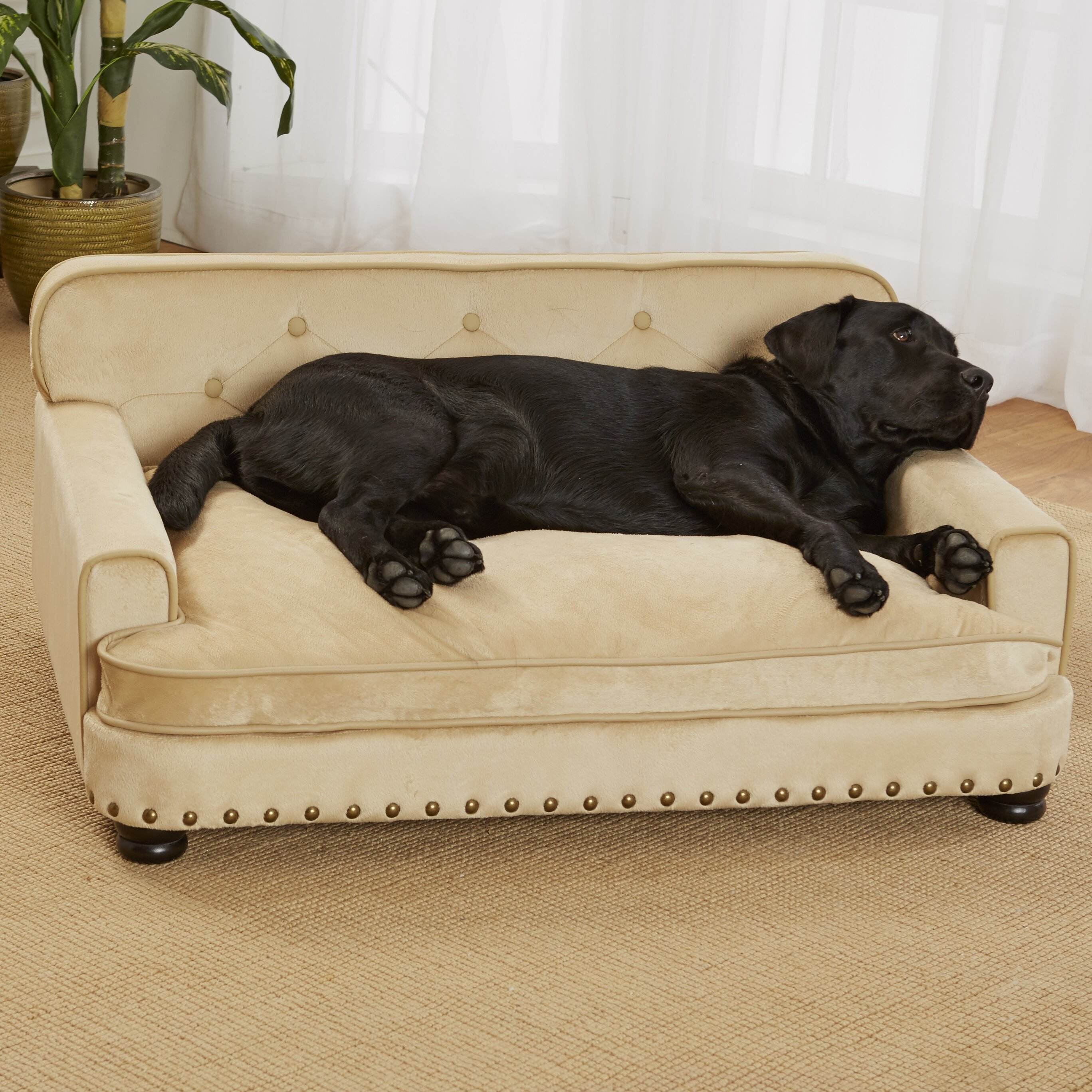 Enchanted home pet library dog sofa reviews wayfair for Big dog furniture