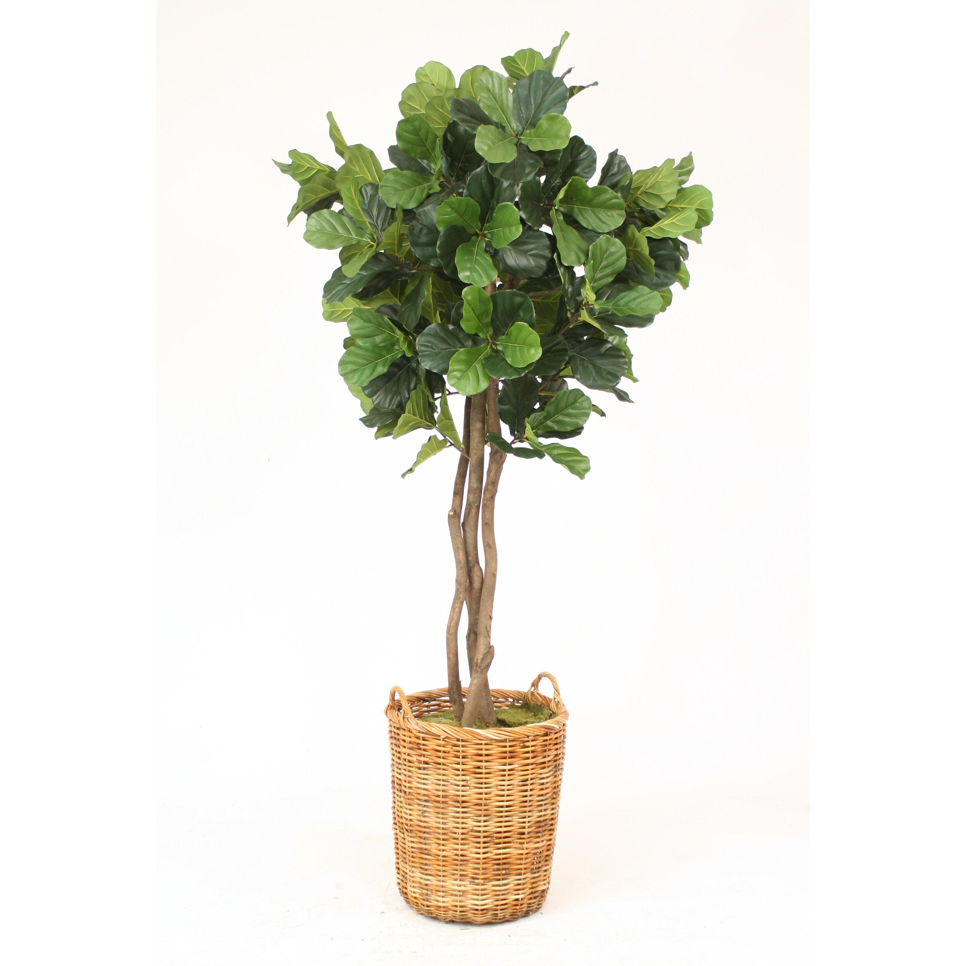 Distinctive designs fiddle leaf fig tree in basket wayfair