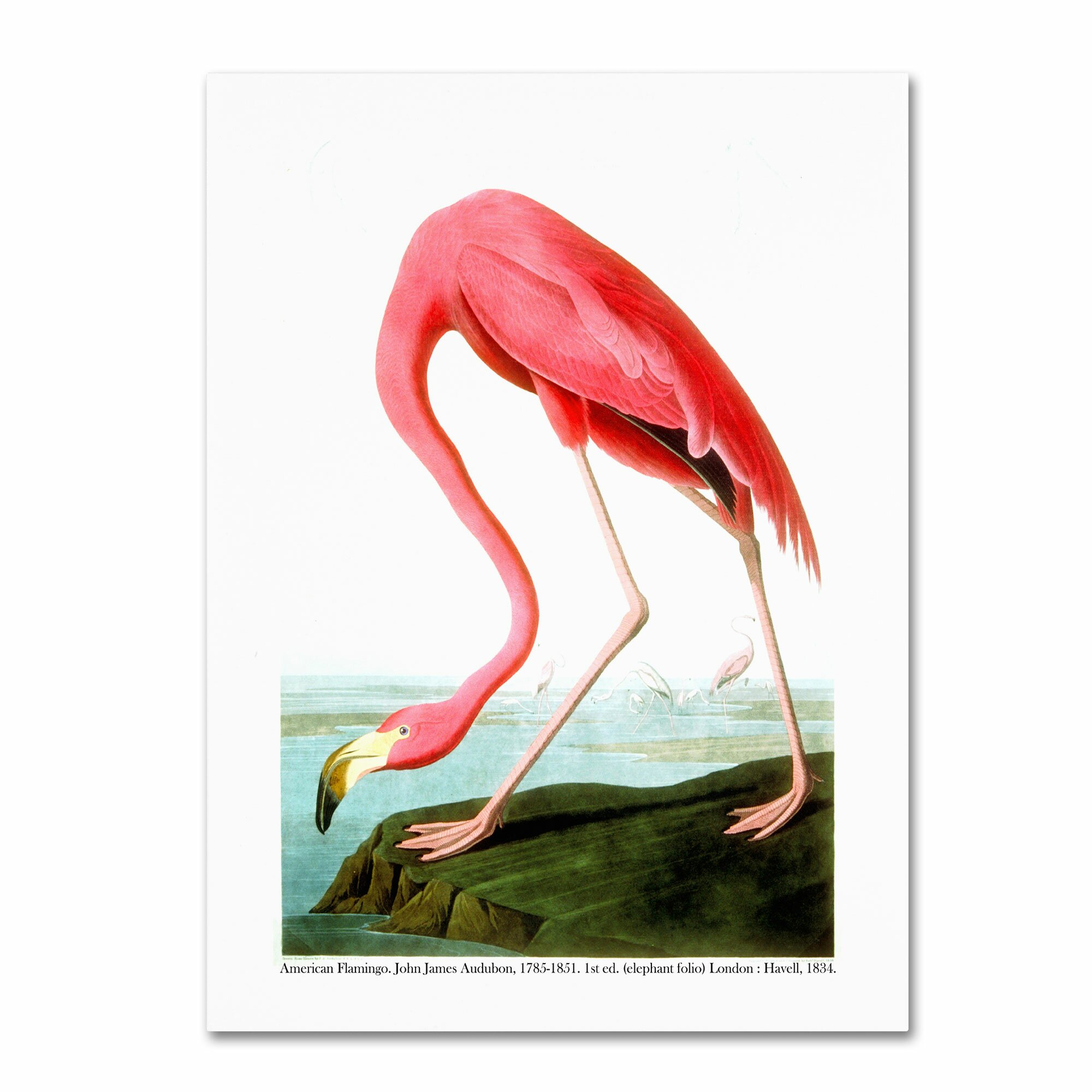 Trademark Art American Flamingo Painting Print On Canvas
