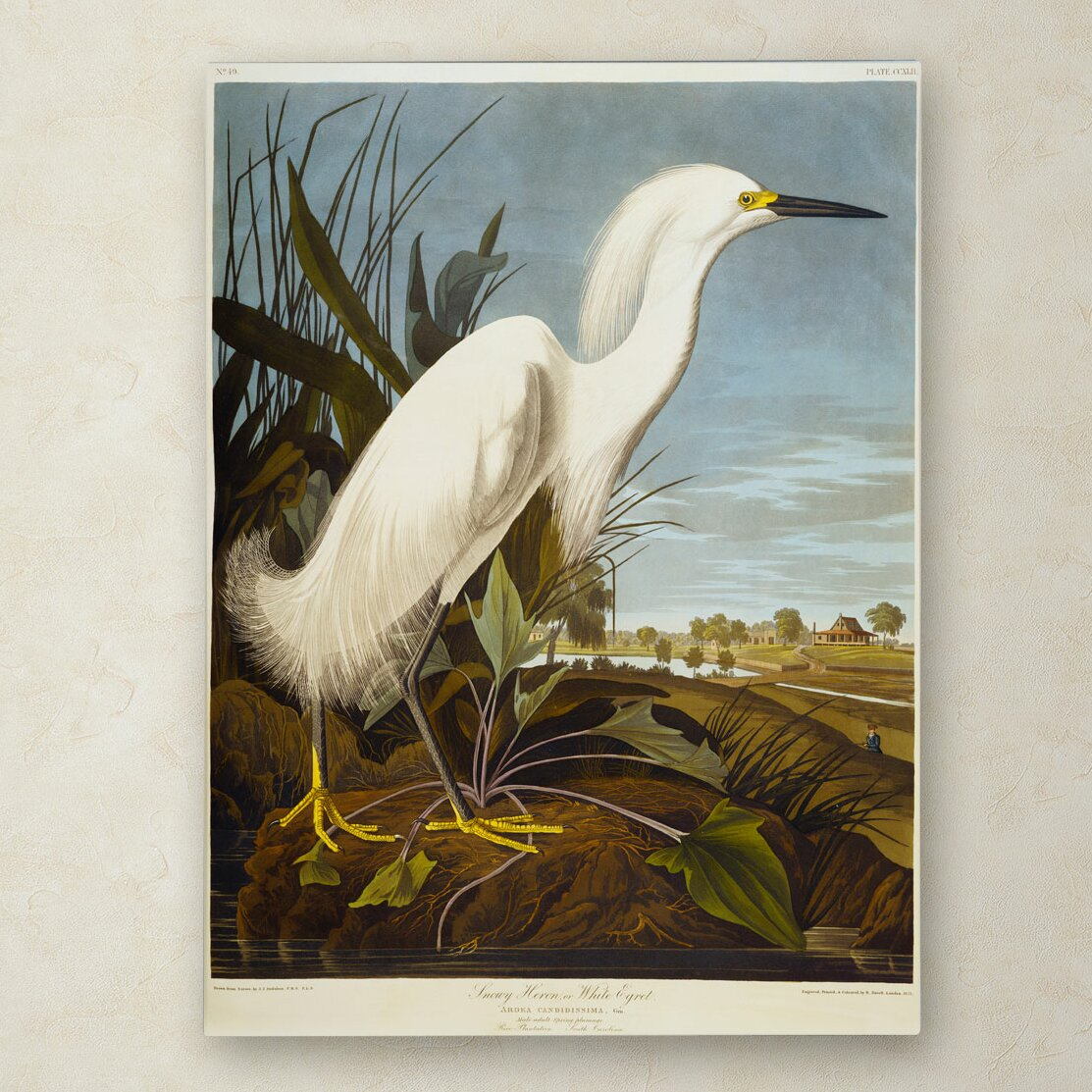 Trademark Art Quot Snowy Heron Quot By John James Audubon Painting