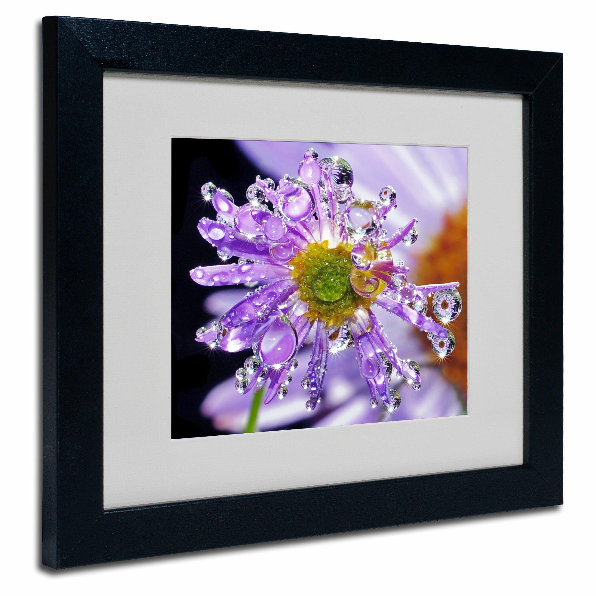 Trademark Art 39 Petal Bling 39 By Steve Wall Framed