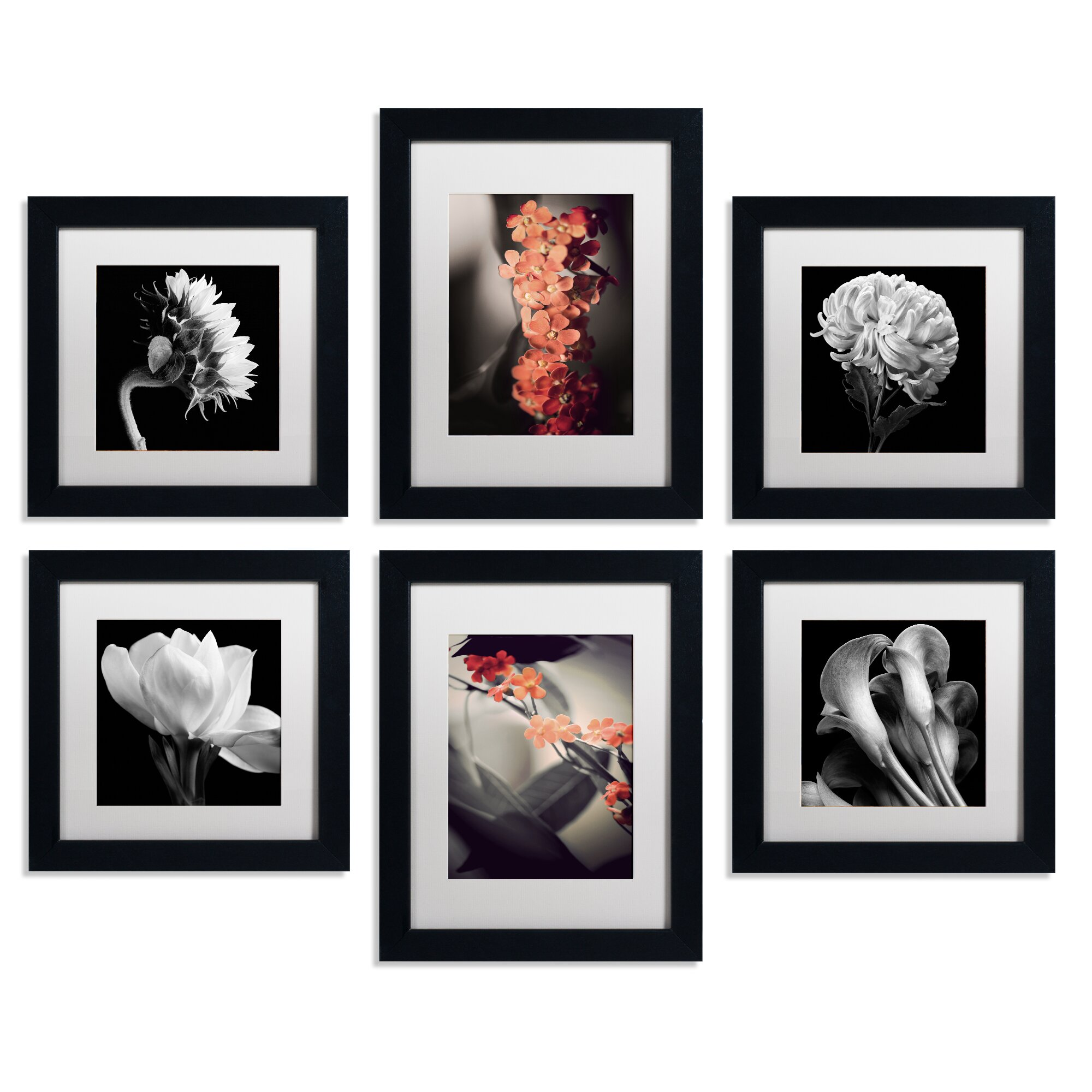 Trademark art floral 6 piece framed photographic print set for Wall art prints