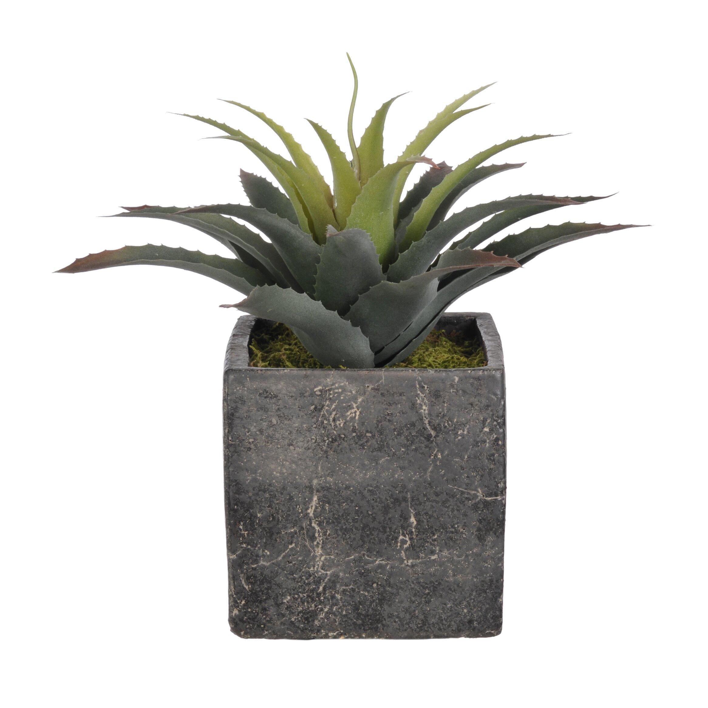 House of silk flowers artificial star succulent desk top plant in cube pot reviews wayfair - Flowering succulent house plants ...