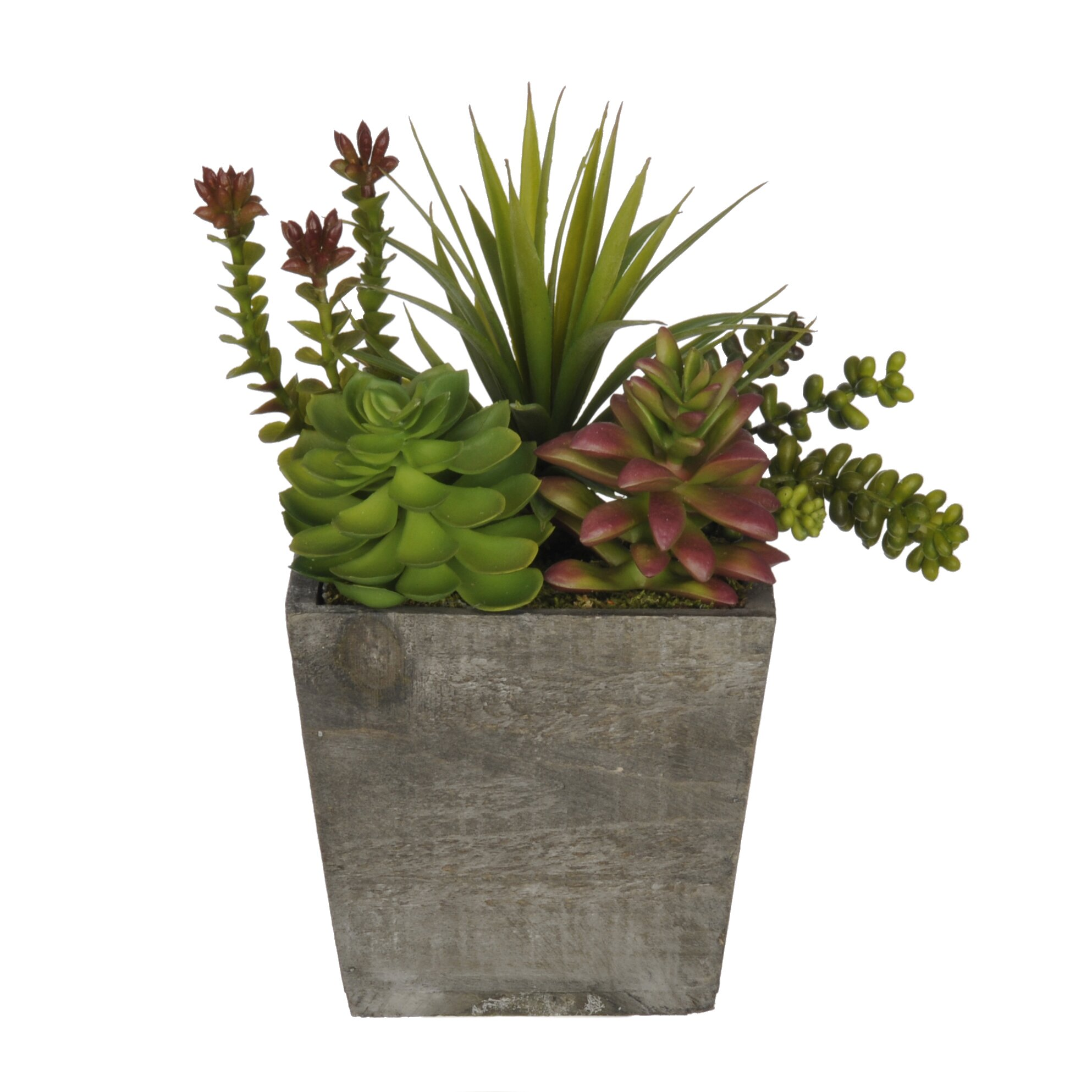 House Of Silk Flowers Succulent Desk Top Plant In Planter