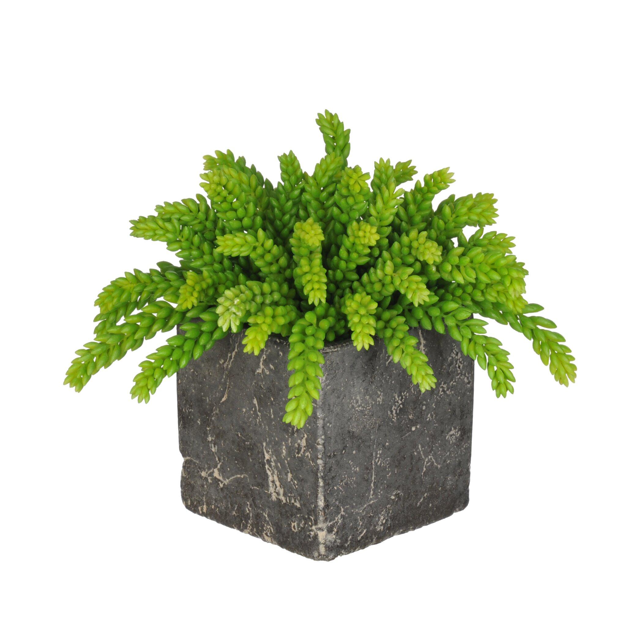 Indoor Plant For Office Desk
