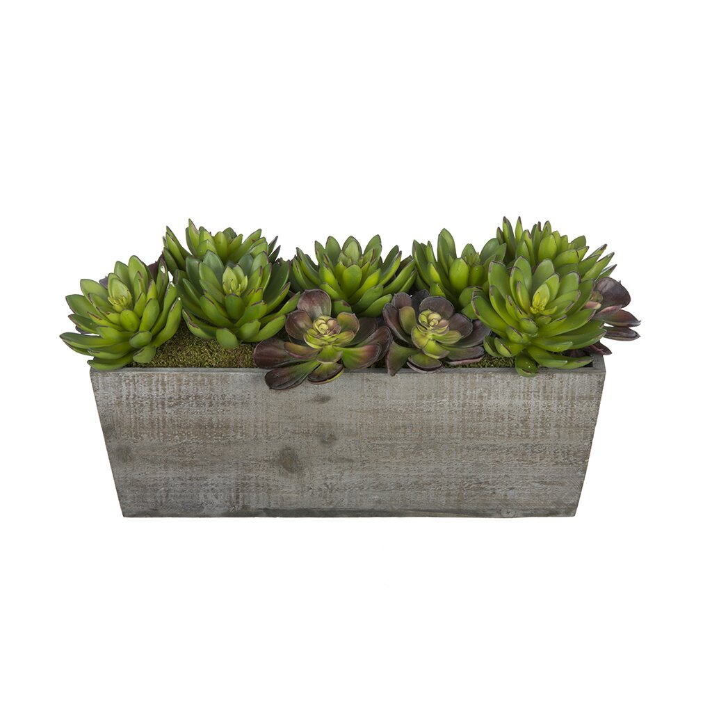 House of silk flowers artificial succulent garden desk top for Decorative plants for garden