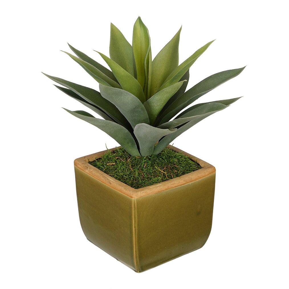 House Of Silk Flowers Artificial Succulent Desk Top Plant