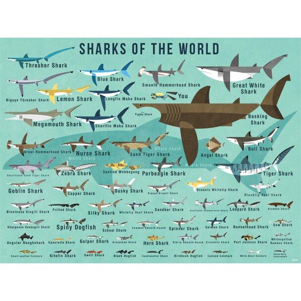 Oopsy Daisy Sharks Of The World By Daviz Canvas Art