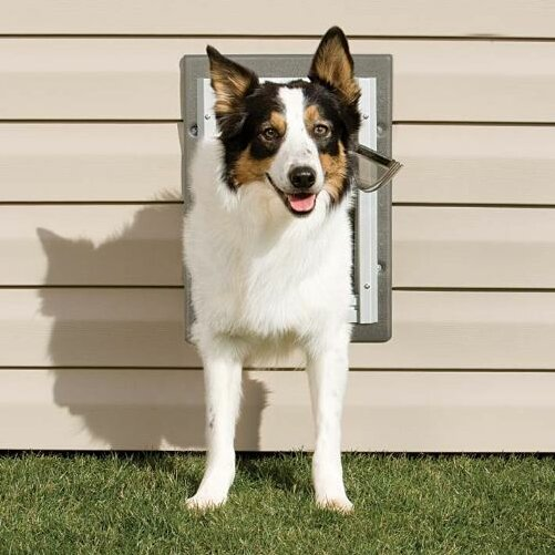 Pet safe wall entry pet door reviews wayfair - Safe pet dog doors ...