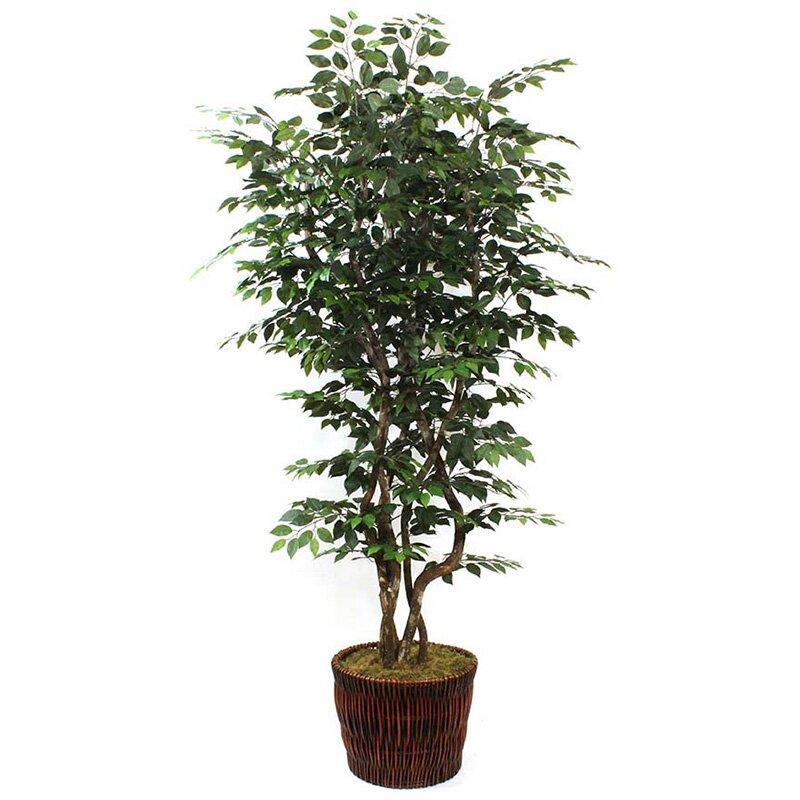 Dalmarko Designs Ficus Tree In Basket Reviews Wayfair