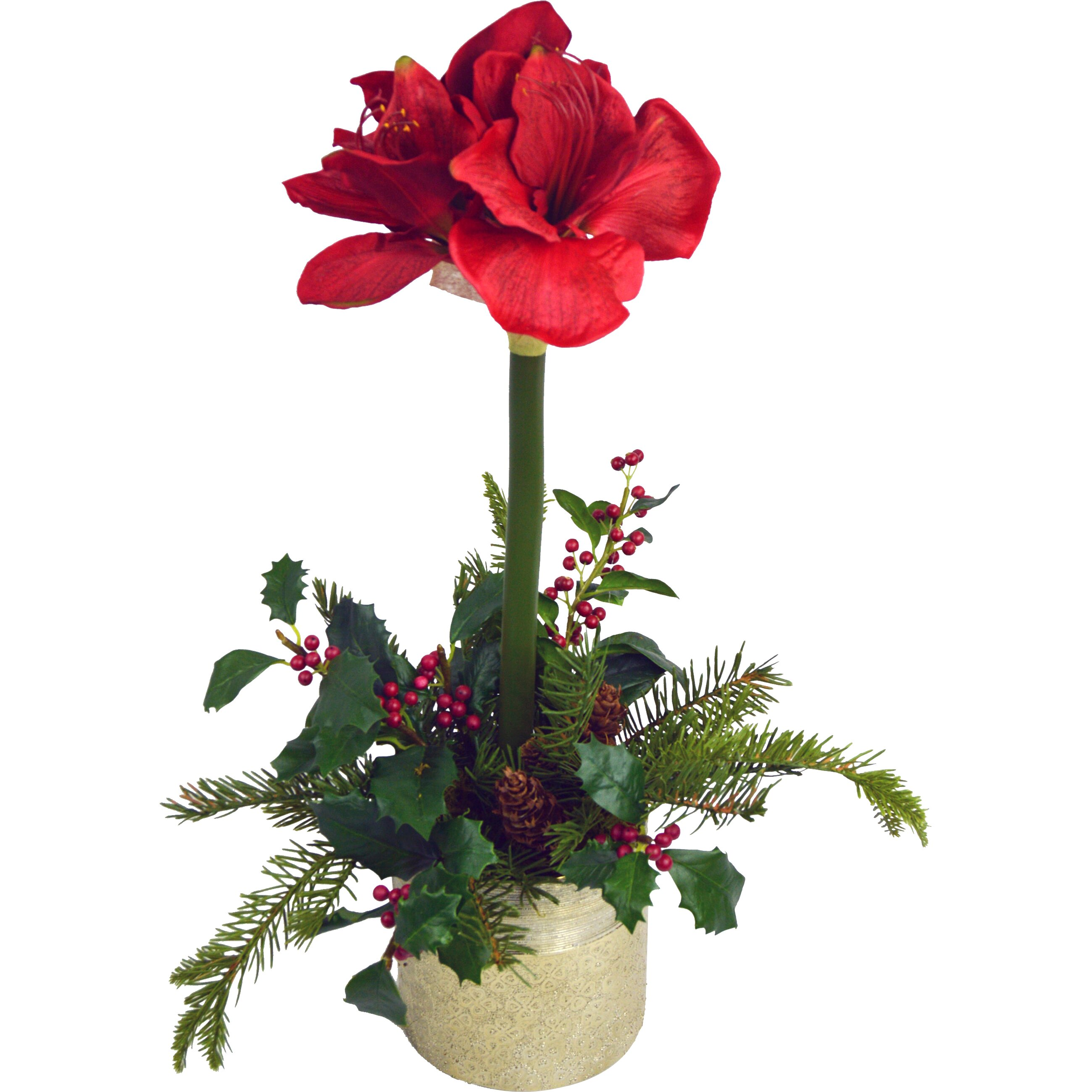 Tc floral company amaryllis in pot reviews wayfair for Pot amaryllis