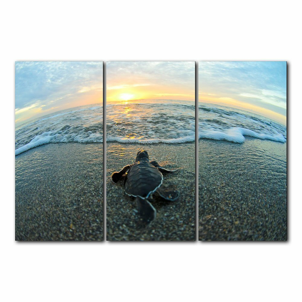 Baby turtle hatchling heading toward the ocean at sunrise.