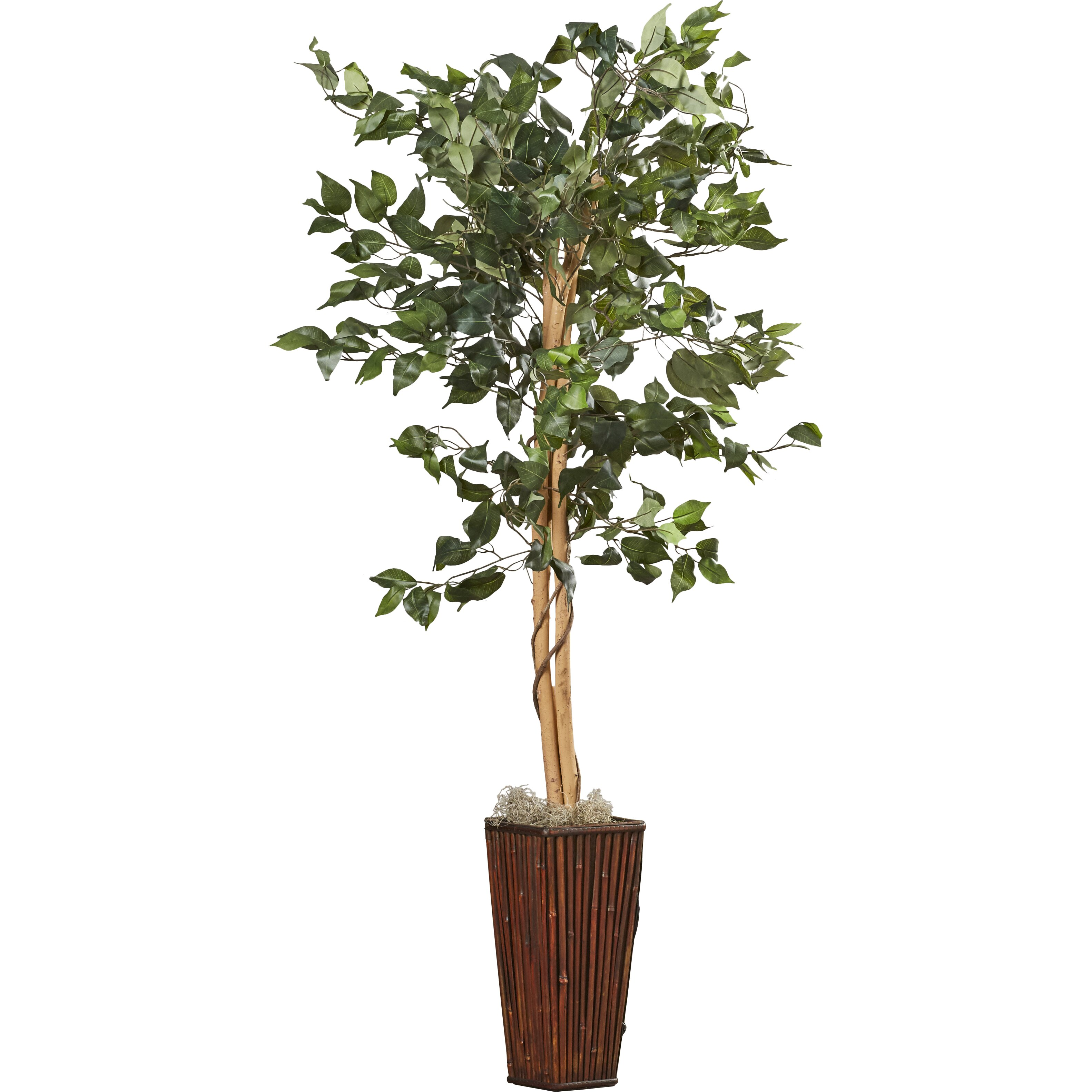 Two Become One Decorative Trees: Charlton Home Ficus Tree In Decorative Vase & Reviews