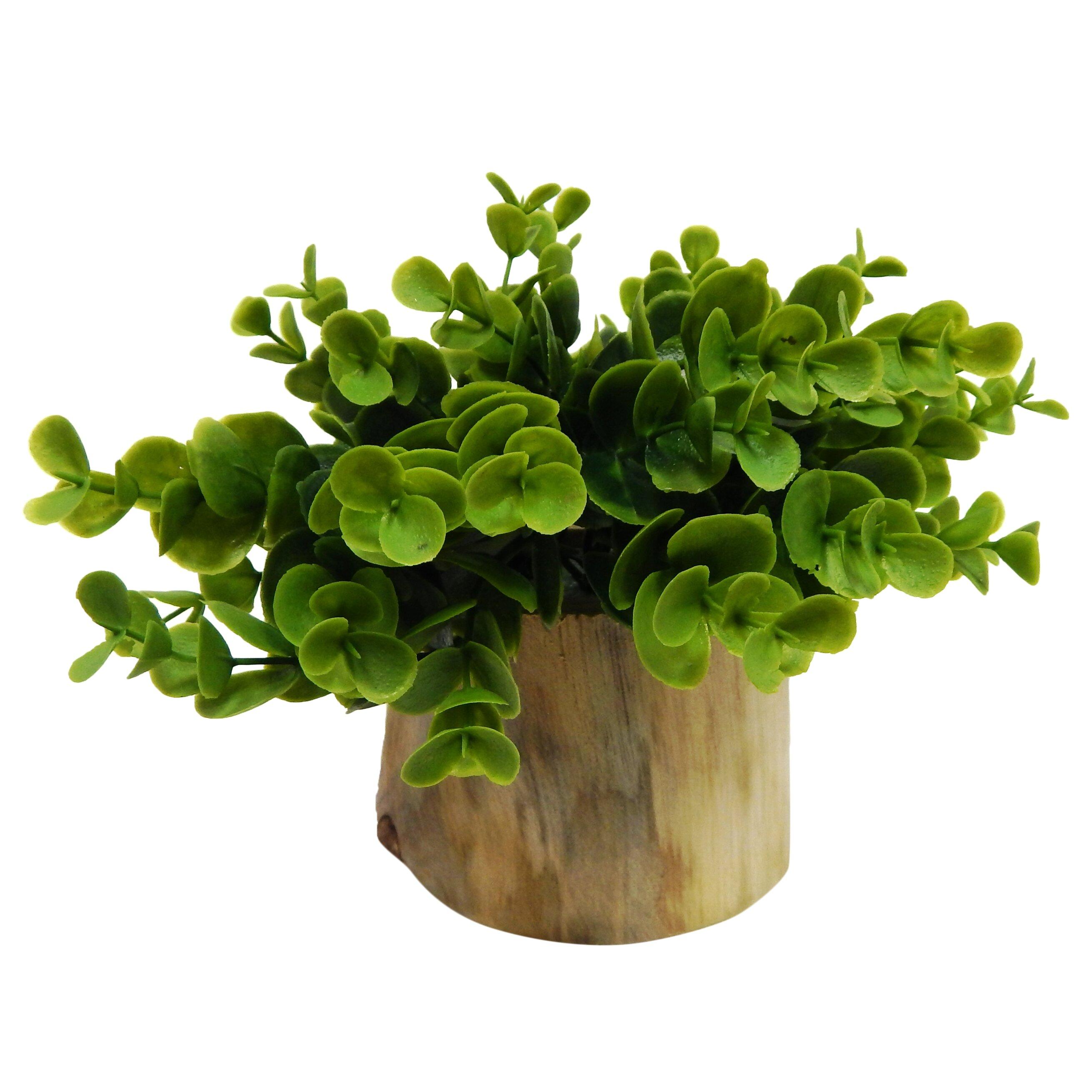 Varick gallery faux naturalist eucalyptus bonsai desk top for Plante a planter