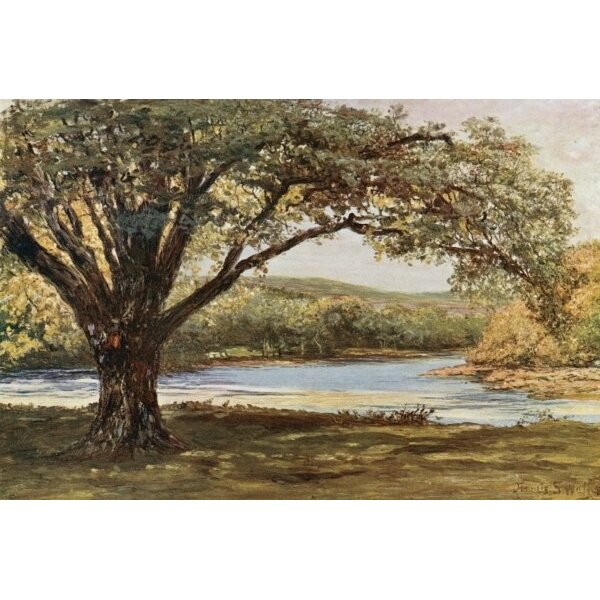 Magnolia Box The Vale Of Avoca By Francis S Walker Framed