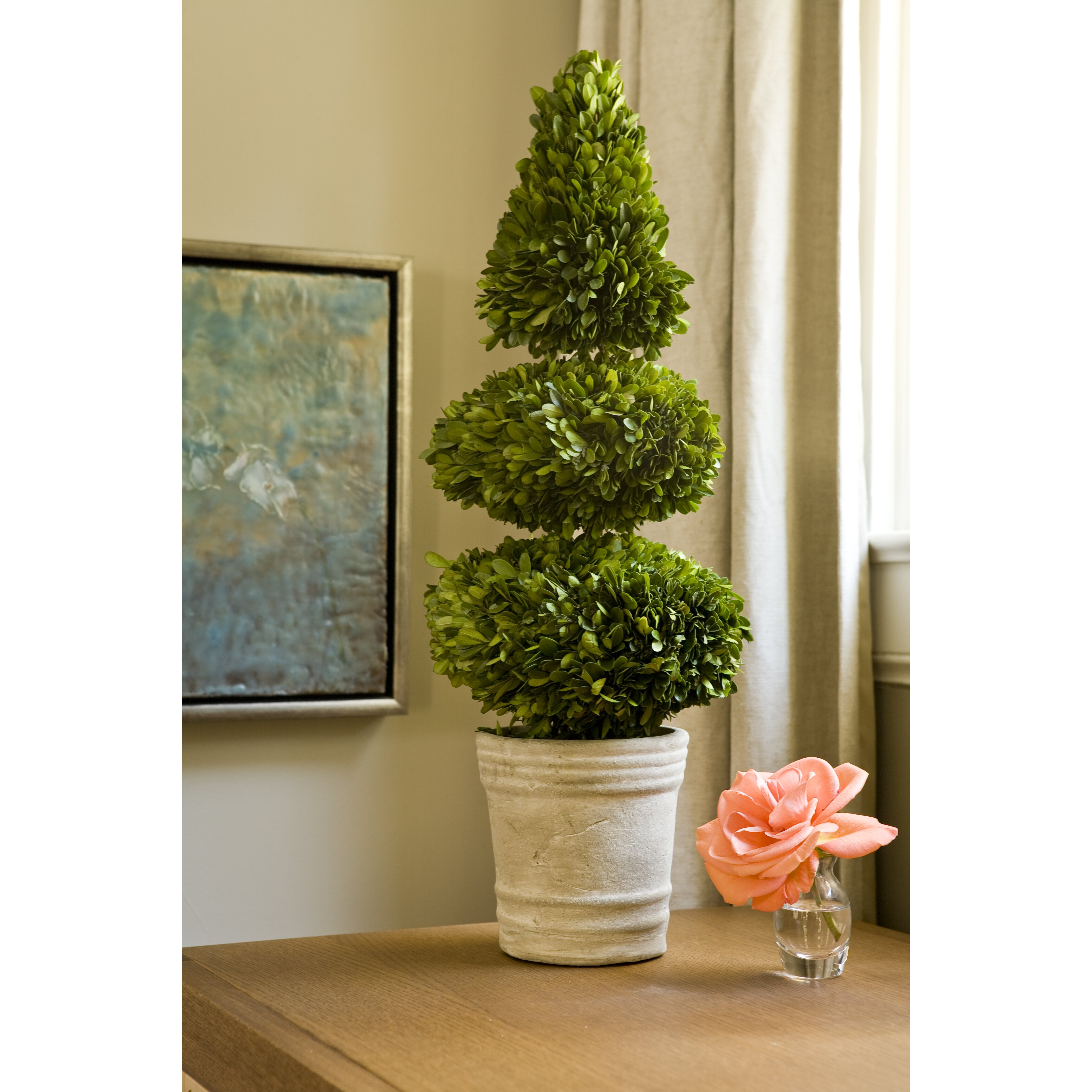 napa home amp garden preserved boxwoods double ball cone