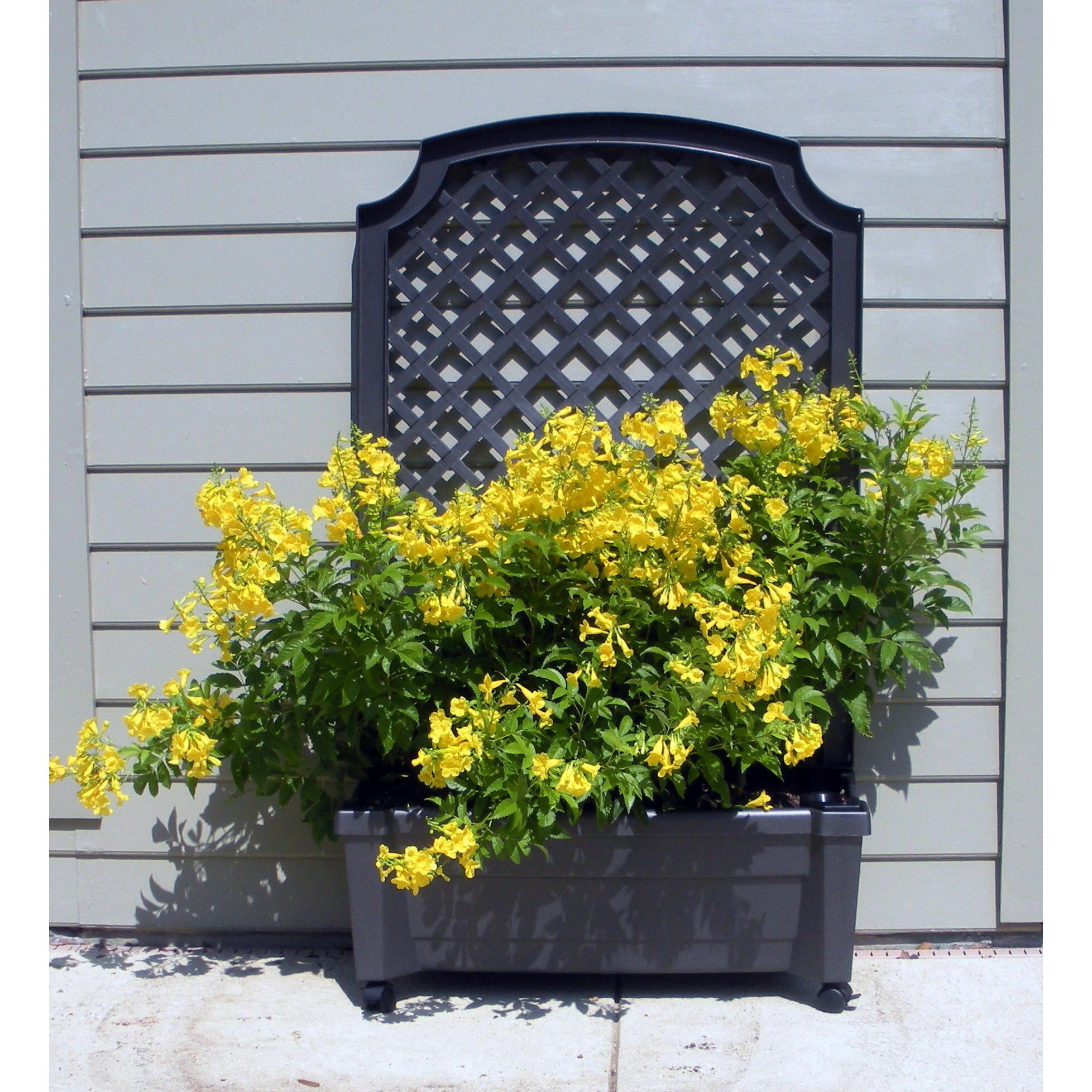 exaco calypso planter with trellis in grey reviews wayfair. Black Bedroom Furniture Sets. Home Design Ideas
