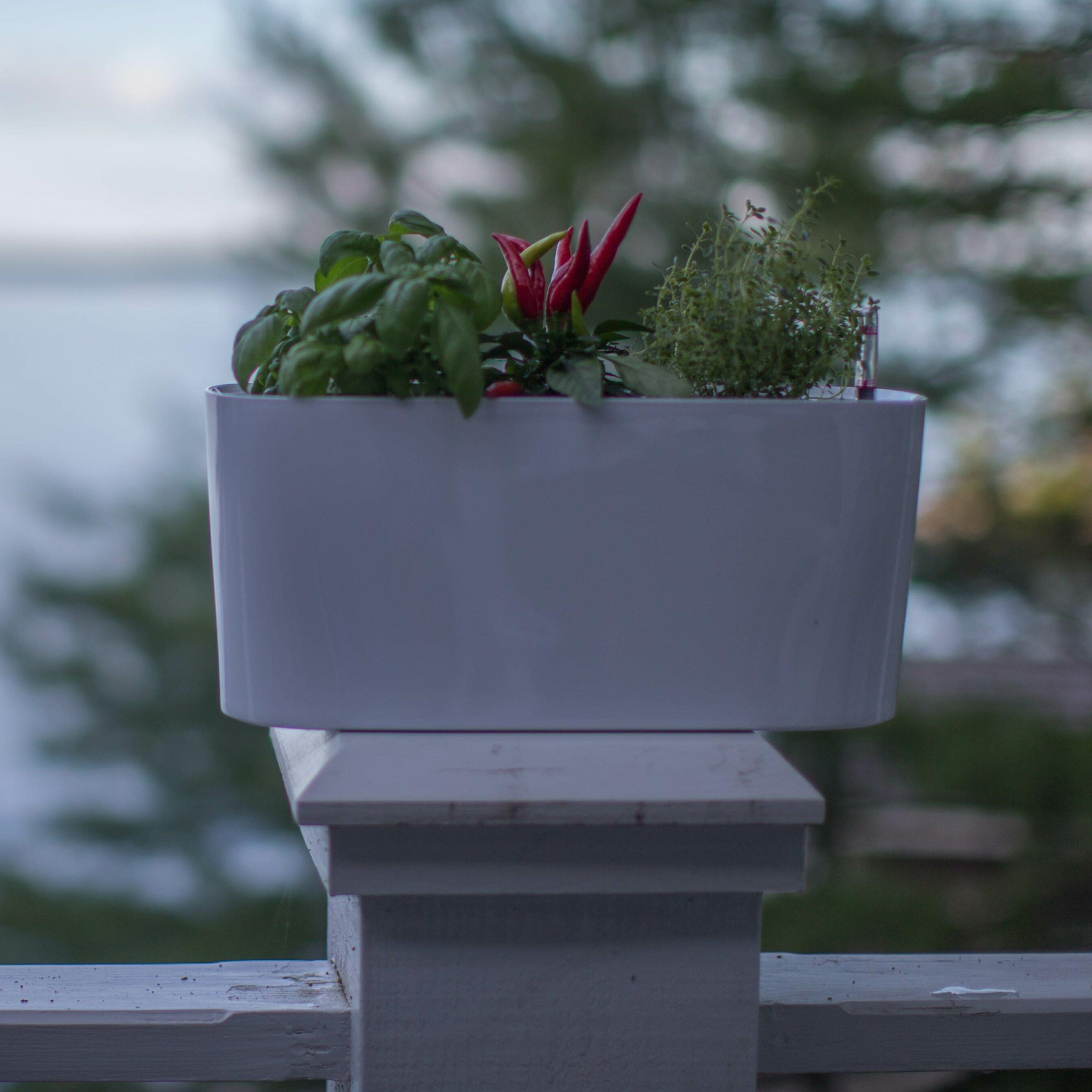 Windowsill Herb Planter: Algreen Modena Rectangular Planter Box & Reviews