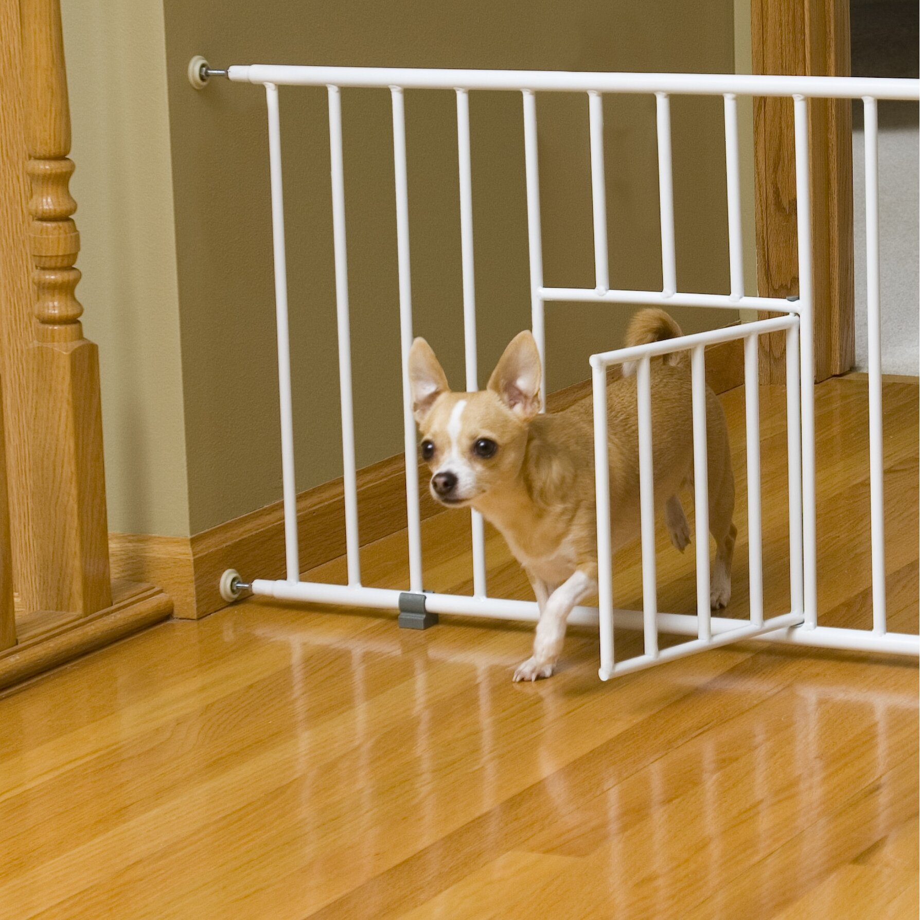 Christmas Tree Gates For Dogs: Carlson Pet Mini Pet Gate With Pet Door & Reviews